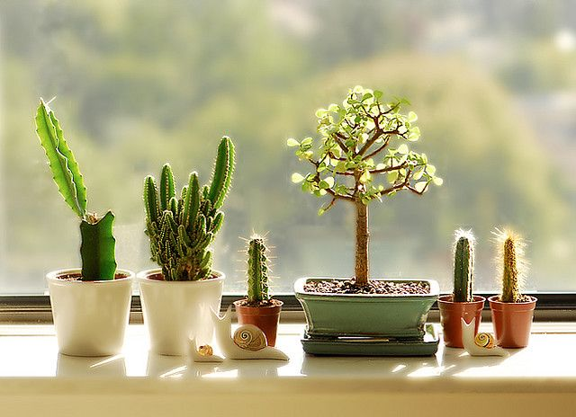 a teeny windowsill garden