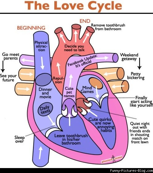 The cycle of love- a look inside your heart... kinda funny ...