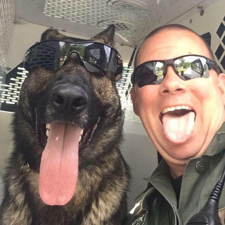 German Shepherd K9 Police & Handler - God Bless & Protect you!