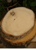 Tree Stumps for Sale on Save-on-Crafts.com