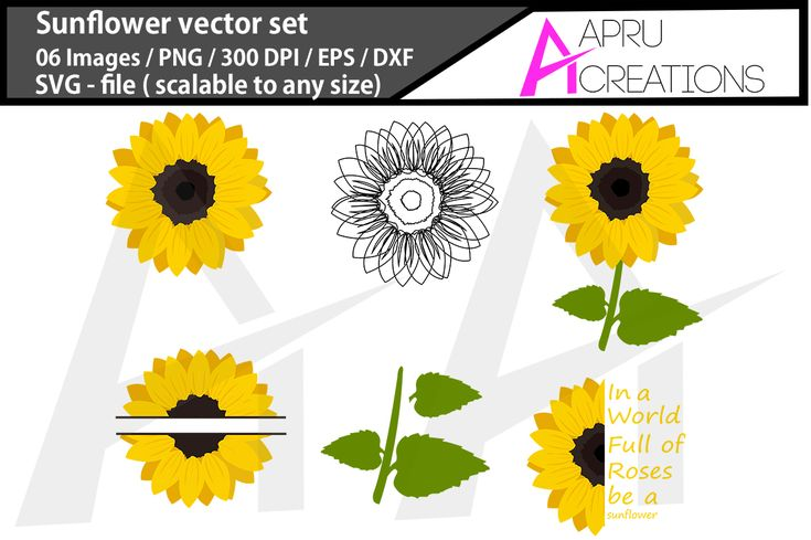 Sunflower SVG vector graphics