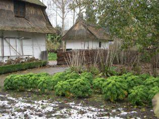 Husets nyttehave med vinterhårdfør grønkål. Garden with winter-hardy kale.