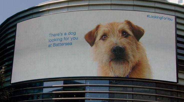 #LookingForYou: Mall-Besucher werden in London über Werbeplakate von einem Hund verfolgt
