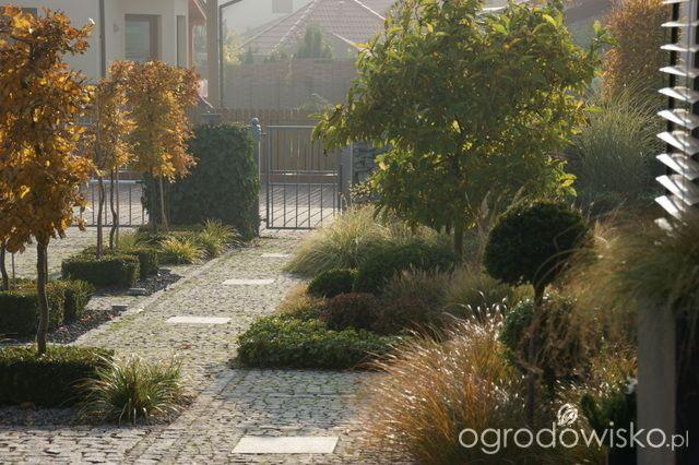 Madżenie ogrodnika cz. aktualna - strona 954 - Forum ogrodnicze - Ogrodowisko