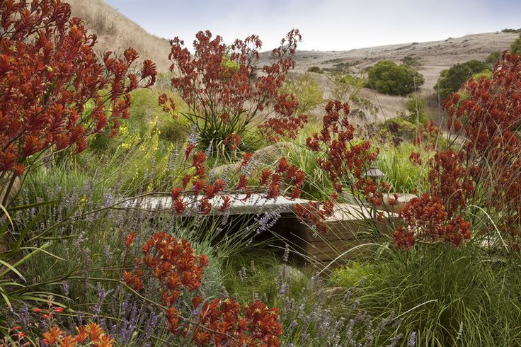 Water-wise native and Australian plantings | Arterra Landscape Architects