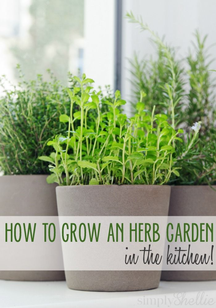 Fresh herbs are great to have on hand in the kitchen. Here are 5 ways to start an herb garden in your kitchen. No backyard needed!