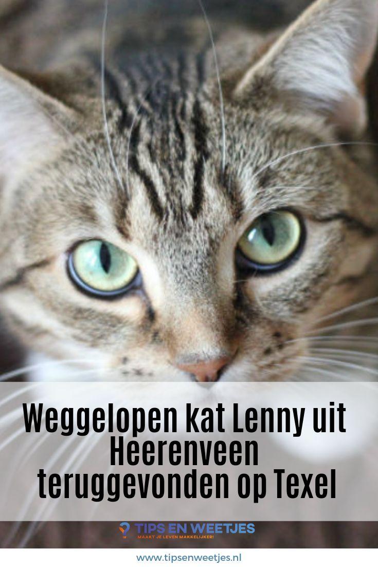 Weggelopen kat Lenny uit Heerenveen teruggevonden op Texel