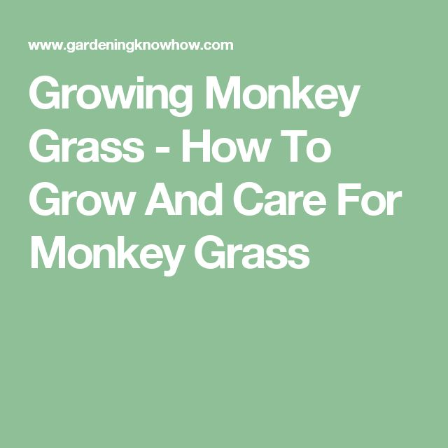 Growing Monkey Grass - How To Grow And Care For Monkey Grass