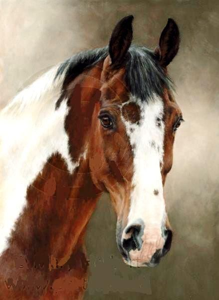 What a gorgeous horse with pretty markings on it's face MARY HERBERT