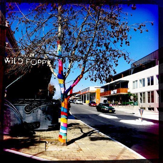 Wild Poppy in Fremantle, WA