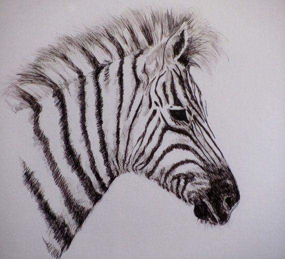 Zebra Drawing Vintage Laura C Jordan Zebra by SaleOfEstates, $49.00