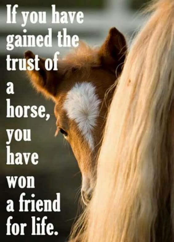 Horse work quotes