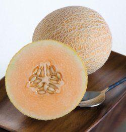 Nätmelon 'Herma', eko, typen odlats sen 1600-talet i drivbänkar och var vanlig på marknader i Sverige innan 1980. Svensk sort från Weibulls från mitten av 1900-talet, rankande, frukter 1,5kg. Runåbergs. 30kr.