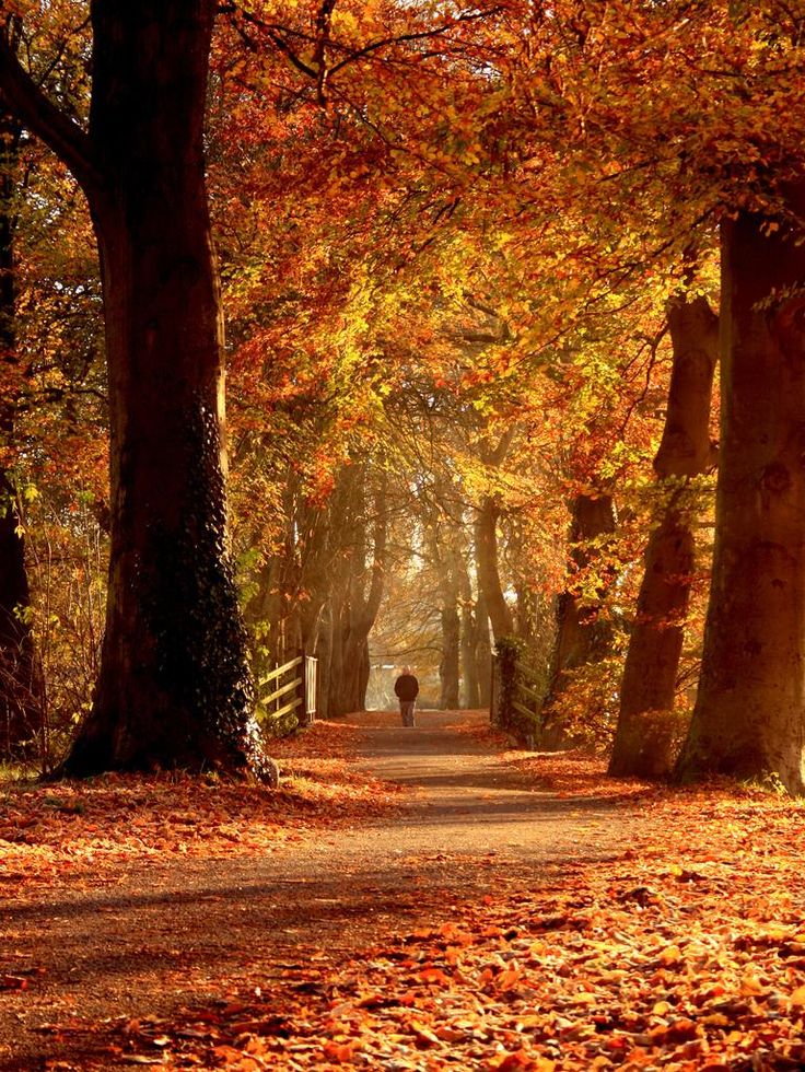 A stroll in the park _ by terry - Pixdaus