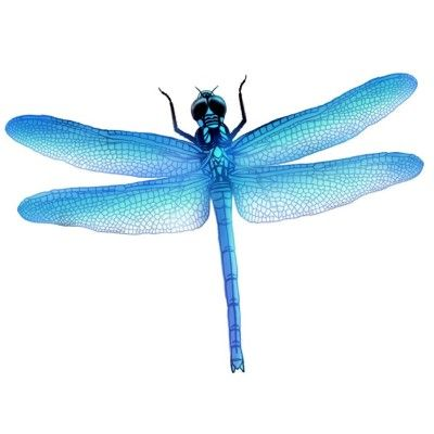 35 best dragonflies images on pinterest  dragon flies