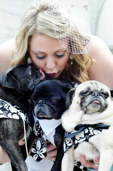 Puppy love! {Pets in Weddings} | Engaged & Inspired