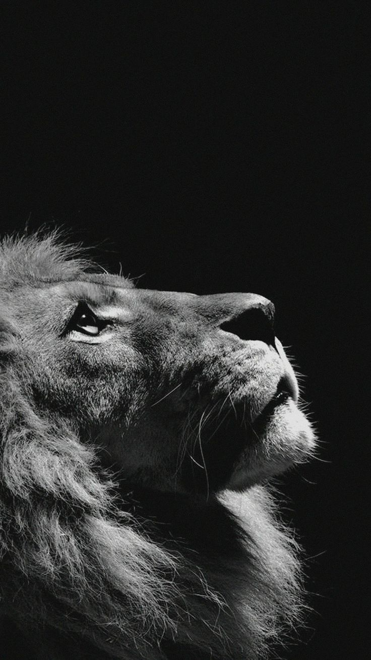 Lion Looking Sky Animal Nature Dark Photo iPhone 6 wallpaper
