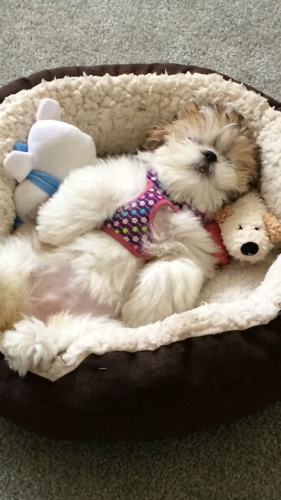 Lilly taking a nap