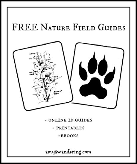 Free Nature Field Guides online guides, printables, & ebooks