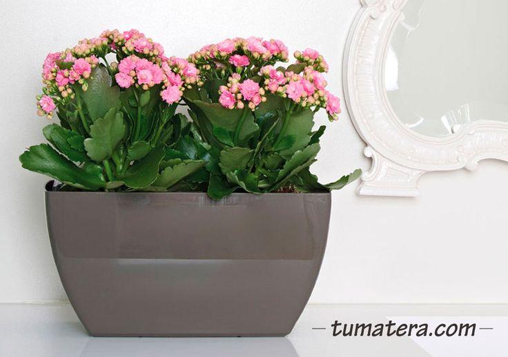 Encuentralas en: http://www.tumatera.co/products/mpa-401417evora/