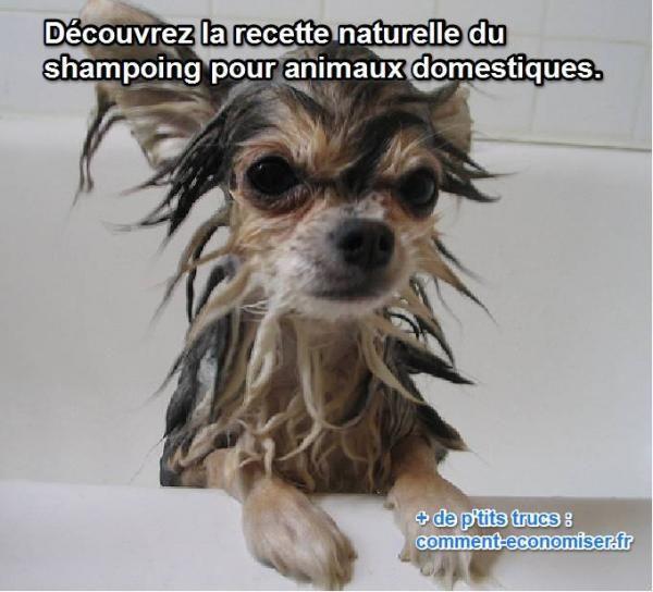la recette du shampoing naturel pour nettoyer son chien fait maison