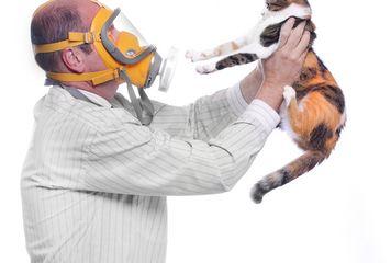 Best Asthma Medicine For Cat Allergy