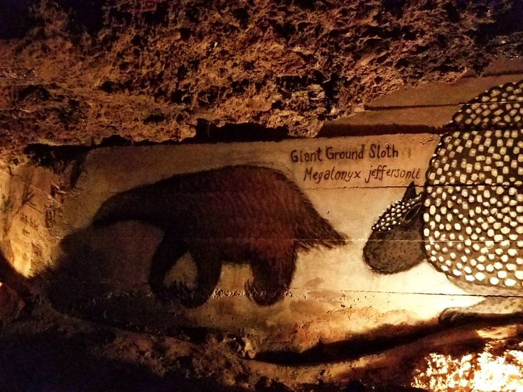 Bones of a giant ground sloth were found in the Inner Space Cavern. An artist painted one on a wall down there #aww #Cutesloths #sloths #boopthesnoot #cuddle #fluffy #animals #aww #socute #puppy #bestfriend #itssofluffy