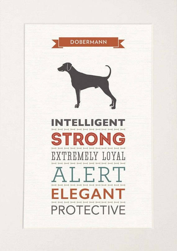 Doberman / Dobermann Dog Breed Traits Print by WellBredDesign