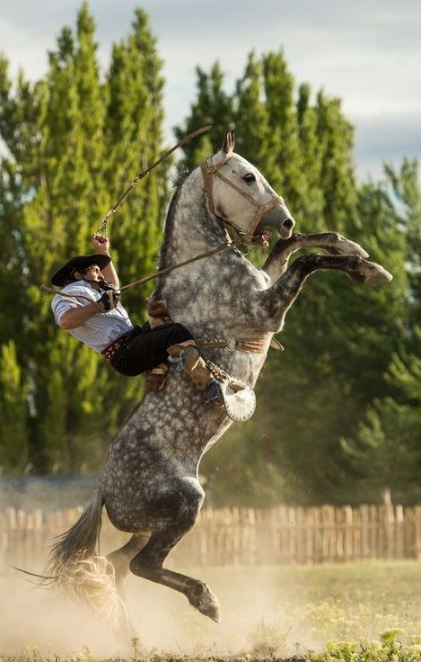 Un gaucho o paisano argentino en acción: jineteada con bastos y encimera (doma de caballos)