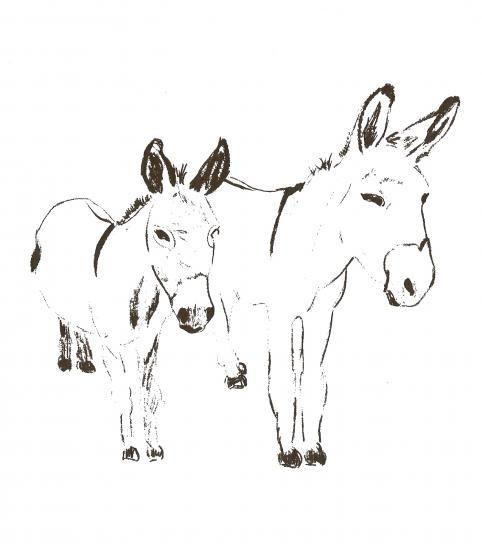 Les 25 meilleures id es de la cat gorie ane dessin sur pinterest nes croquis d 39 un cheval et - Dessiner un ane ...