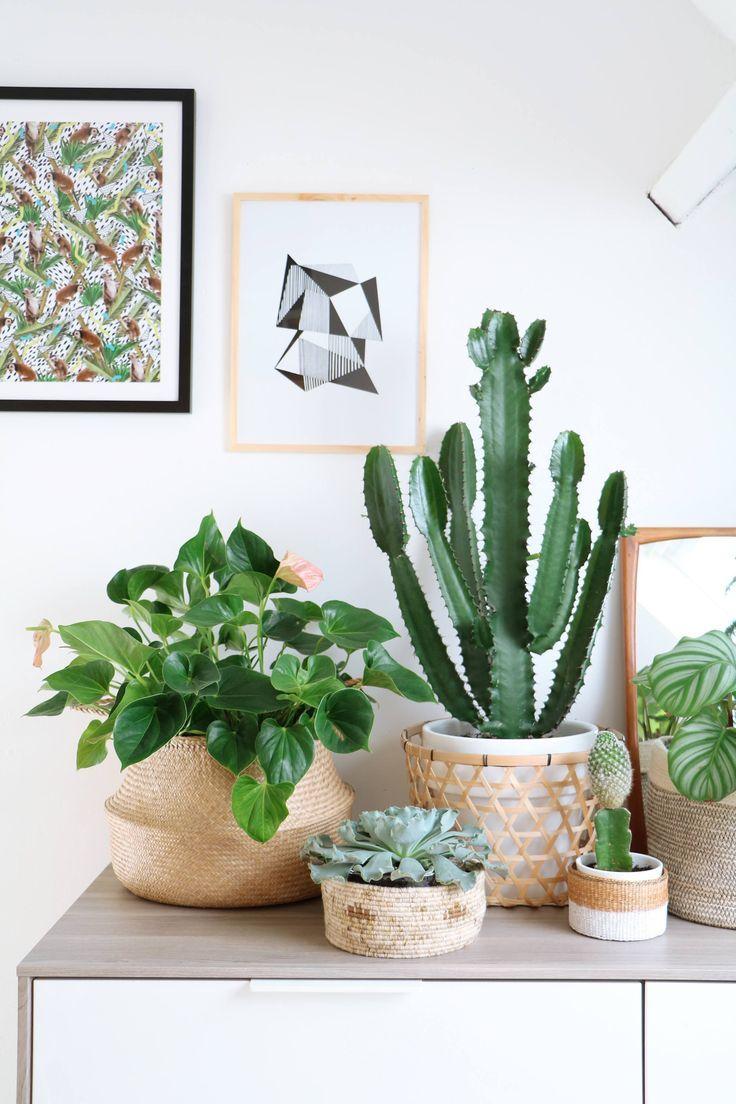 Planten in manden, gewoon doen want het is helemaal hip op dit moment. Combineer vetplanten met cactussen.