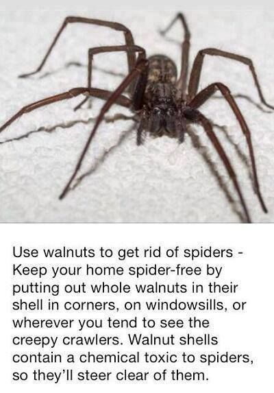 7 best images about how to kill spiders safely on for Home remedies to keep spiders away