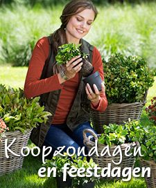 TUINCENTRUM VACATURES De leukste tuincentrum vacatures vind je bij GroenRijk! Op deze website vind je alle actuele tuincentrum vacatures van de GroenRijk tuincentra in Nederland. Je kunt zoeken op vestiging of provincie, dat maakt het gemakkelijk om een baan bij jou in de buurt te vinden. Bij GroenRijk zijn er diverse afdelingen waar je kunt werken. De tuincentra zijn opgedeeld in het BinnenRijk, BuitenRijk, WaterRijk, SfeerRijk en DierenRijk.