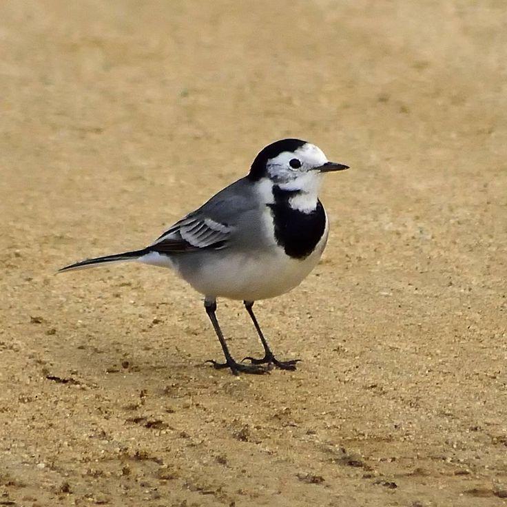 #lavanderablanca #pajarospequeños #littlebirds #birdswaching #natureshots #naturelovers #naturelife #freelife #freelifestyle #goodvibes #buenasvibraciones #gypsysoul #nikon