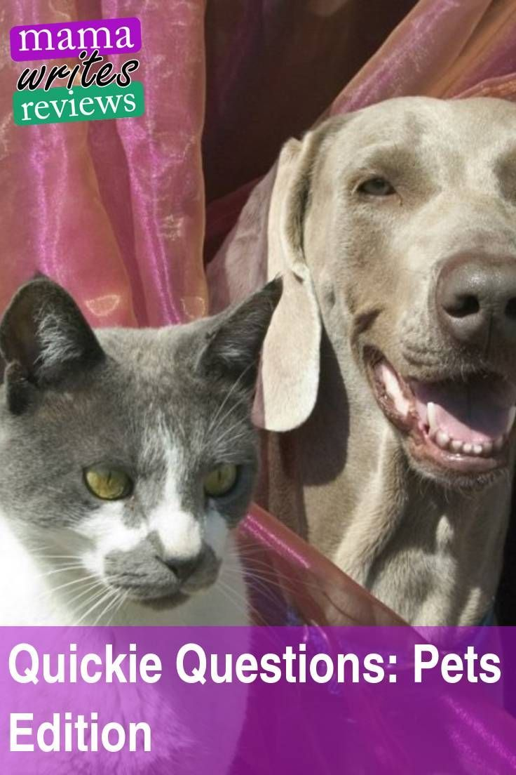 Quickie Questions Pets Edition This Or That Questions Pet Insurance Reviews Kitten Care