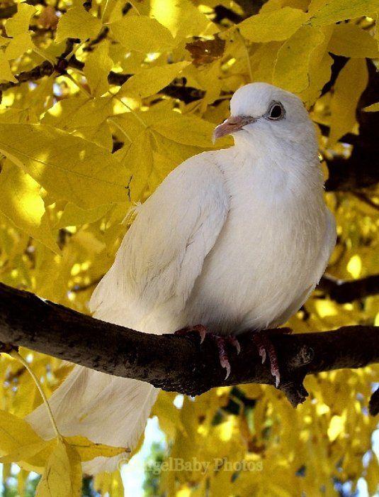 http://www.shutterpoint.com/Photos-ViewPhoto.cfm?id=763910