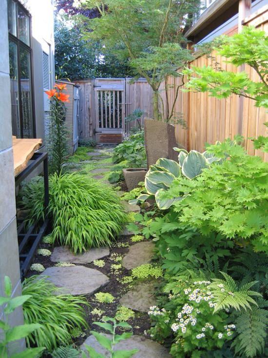 herbe japonaise et plantes luxuriantes