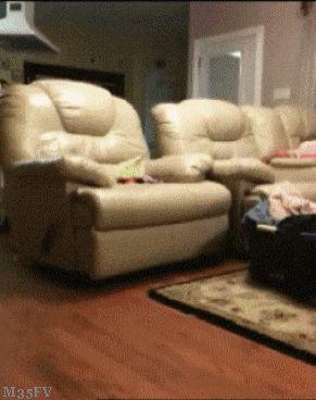 Hound Dog Animals Giff #7201 - Funny Dog Giffs| Funny Giffs| Dog Giffs