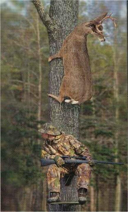 Deer over man in tree stand