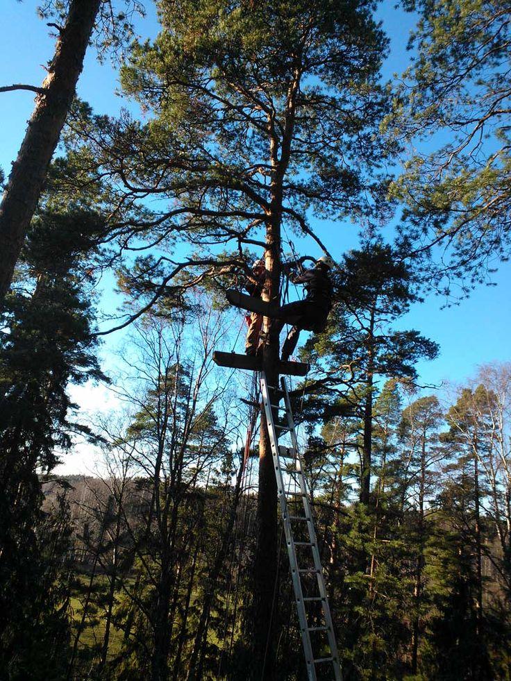 Kaksi miestä puussa rakentamassa