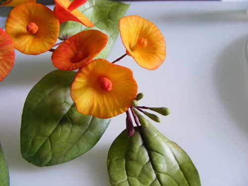 how to: chinese hat flower
