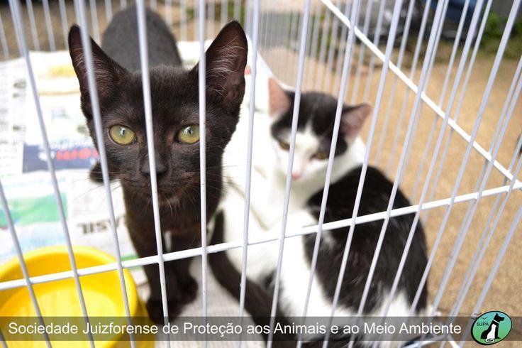 SJPA - Sociedade Protetora dos Animais de Juiz de Fora - Fotos