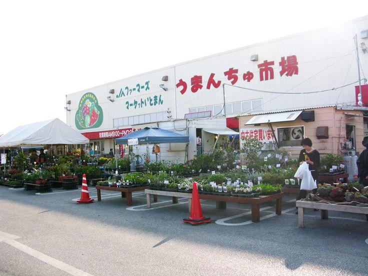 Michi-no Eki Toyosaki. Farmers Market. Address: 3-39  Toyosaki. Tomigushuku City Okinawa. Opening Hours ParkingJA Okinawa 9:00 - 19:00 Open All Year