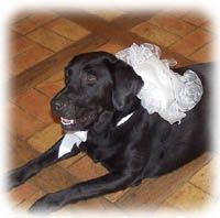 Pets at wedding tips || note: if we have bae there, he will *not* be in doggie clothes.