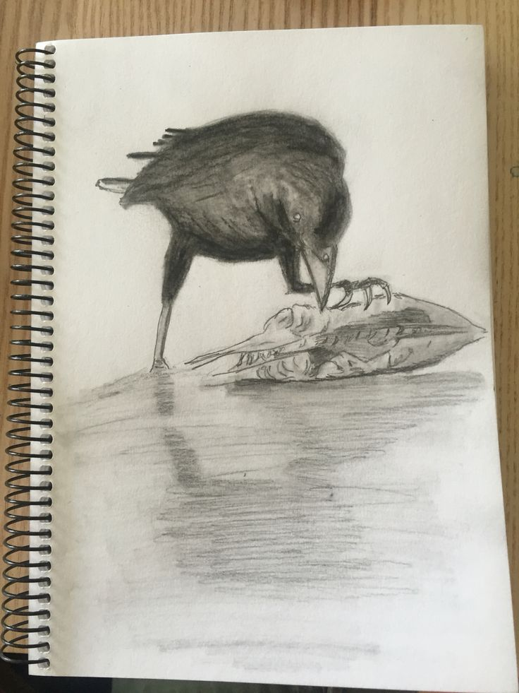 Crow and fish. Tofino.  4x6 pencil and charcoal.  Scobie. Sept 17, 2016