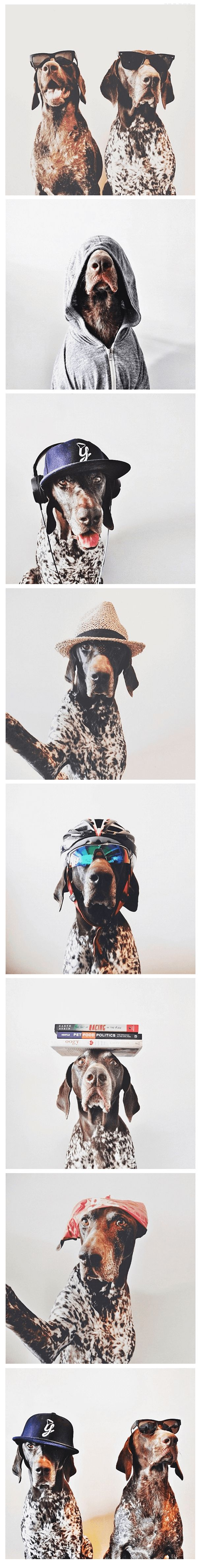 21 Ways of Showing How German Shorthaired Pointers Outrank Anyone in Awesomeness