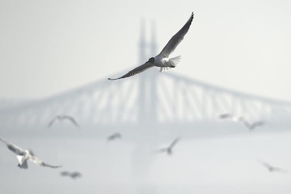 Helló, Február! Párában a város. Szép pillanatképek Budapestről