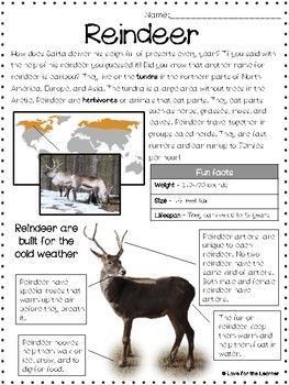 Reindeer Reading Passage ::FREEBIE