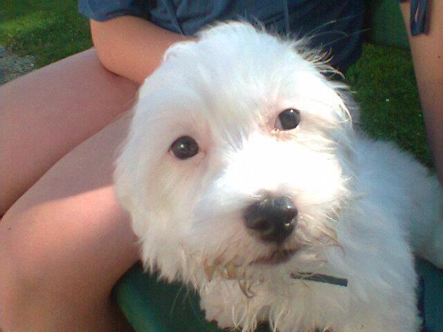 My Dogg