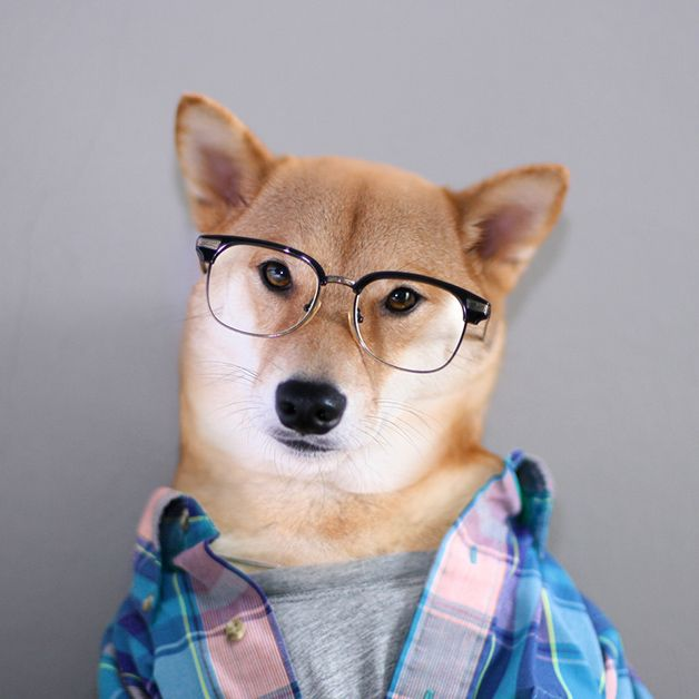#dog #style #glasses